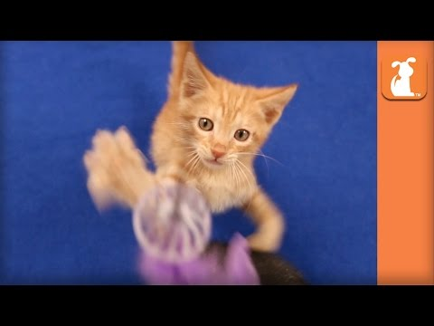 Extreme Kitten Feather Action (EXTREMELY NSFW... Just Kidding) - Kitten Love