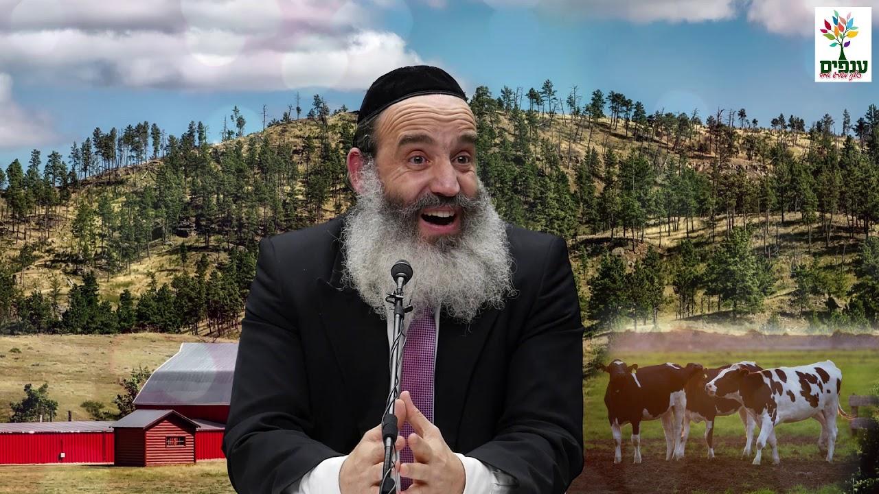 הרב יצחק פנגר - העכבר HD - קצר ומיוחד!