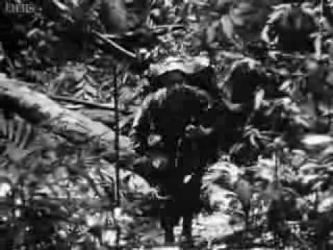 Jungle Green (1964)