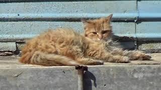 Дворовые серые полосатые коты