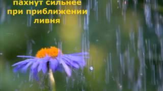 Природа дождь и их приметы, видео презентация(Видео про природу о дожде, её приметы, которые вам необходимо знать. В природе всё взаимосвязано животные,..., 2015-03-02T16:43:18.000Z)