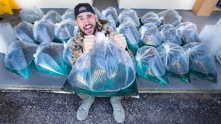 Transporting 2,500,000 Million Shiners In My TRUCK!!! (overloaded!!)