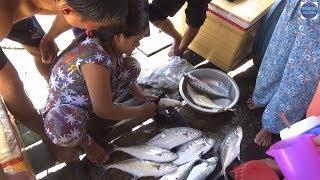 Theo Ngư Dân Ra Khơi Đánh Lưới Ghẹ ở Phú Quốc (Phần I)/ netting crabs