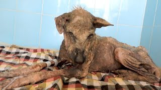 Her spirit was broken; incredible transformation of dying dog