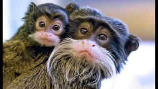 смешные истории про животных, прикольные видео с животными.