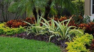 Gambar cover Tropical Landscape Color in Boca Raton