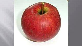 Выращивание плодовых деревьев и ягодных кустарников