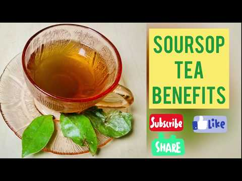 Benefits of SOURSOP LEAF TEA!!!