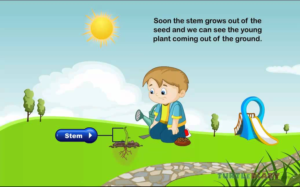 Life Cycle Of Plants Science Game And Lesson Plan Youtube
