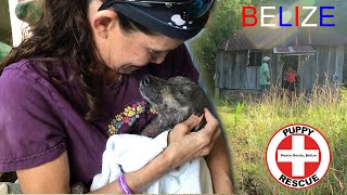 PUPPY RESCUE in PUNTA GORDA, BELIZE