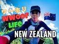 【超レア】ニュージーランド