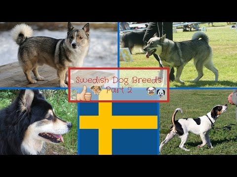 Swedish Dog Breeds Part 2