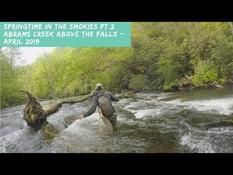 Springtime In The Smokies Pt.2 - Abrams Creek Above Abrams Falls - Fly Fishing - April 2019