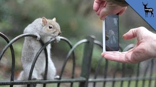 New York City Squirrels are More Evolved
