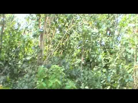Kikopo Movie From Kibondo Kigoma Tanzania