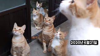 고양이의 첫 외출