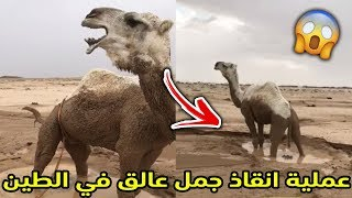 The rescue operation of an animal stuck in the mud | Adventures in thunderstorms 🐪⚡😱