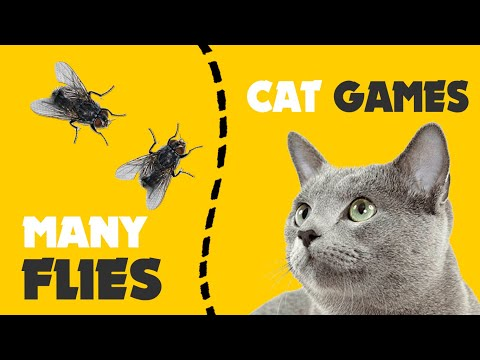 GAMES FOR CATS   hunt MANY FLIES on screen 1 hour