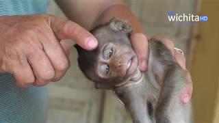 Help save baby Lori