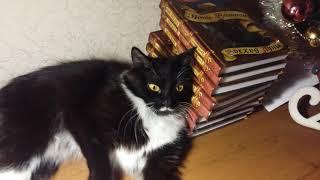 Моя коллекция книг Коты-Воители || Firestar КВ