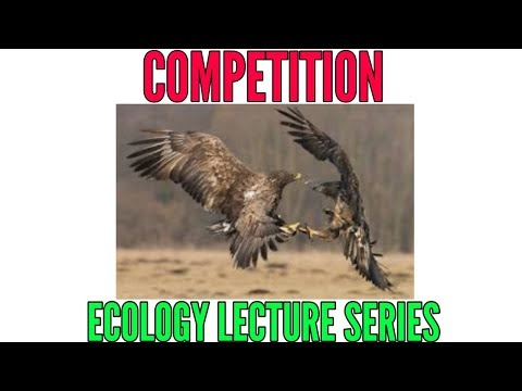 Competition With Examples- Population Interactions In Ecology