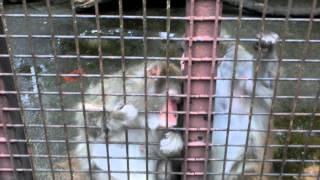 千葉県市原市にある動物園です。2014年6月撮影。
