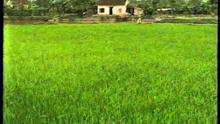 Rice and aquaculture: Viet Nam