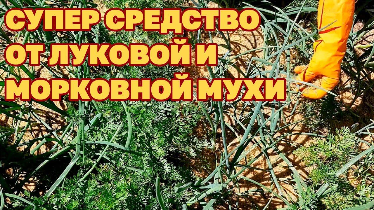 вредители сада и огорода методы