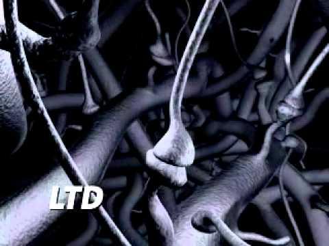 The Plastic Brain (full animation)