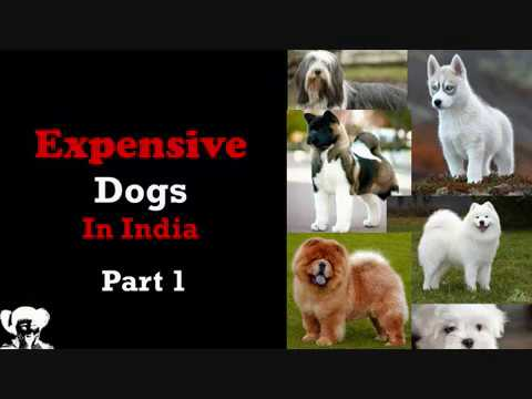 Expensive Dog in India Price List l Dog above 50000  l Costly dog in India 2018 l Latest dog price