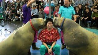 大爆笑 o(^∀^)o 鳥羽水族館のセイウチショー Walrus Show in Toba Aquarium
