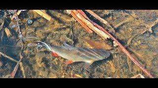 НАШЛИ НА БОЛОТЕ МНОГО РАЗНОЙ РЫБЫ! Рыбалка весной 2019 на Мормышинг
