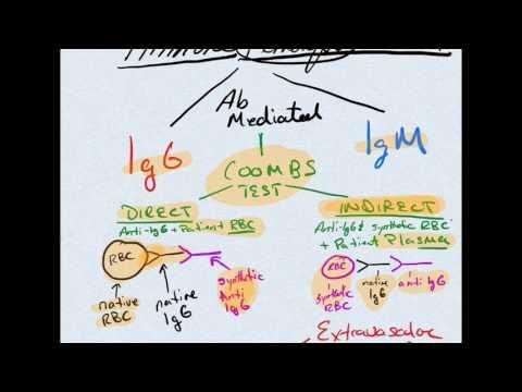 Autoimmune Hemolytic Anemia & Coombs Test #USMLE #COMLEX