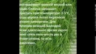 Эксклюзив. Березюк:можно провести довыборы в парламент осенью совместно с выборами на Донбассе 17.06