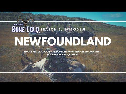S5 E8: Newfoundland Moose And Caribou