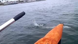 Little Sharks On Inflatable Pontoon