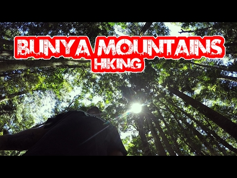 Bunya Mountains National Park Hiking