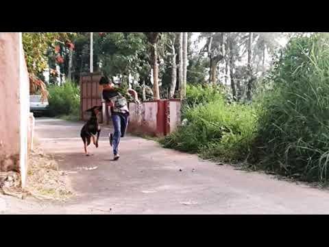 #Husky #Doberman #friends for #life Funny pets Skyler the Husky Amber the Doberman #funnypets #pets