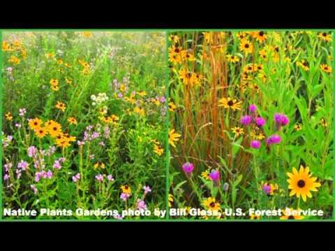 USFS Eastern Region Botanist: Cultivars needed for food supply, but native plants help pollinators