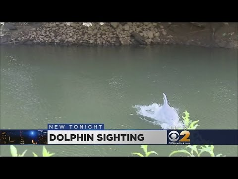 Dolphin Spotted In NJ River