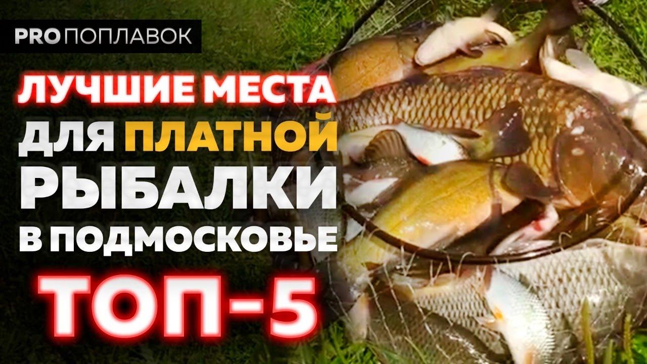 Платная рыбалка в Подмосковье 2020. Лучшие места в Московской области по версии Юрия Радугина.