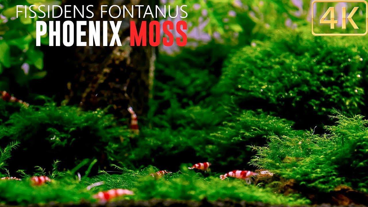 Christmas Moss Carpet.How To Moss Carpet