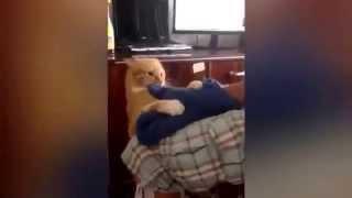 прикол с котом дикий кот