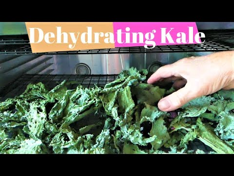 Dehydrating Kale From The Garden With A Cabelas Dehydrator |food Storage