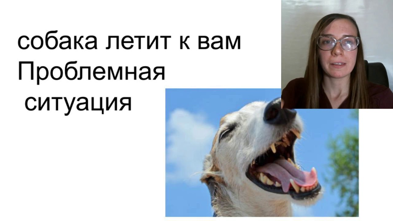 собака без поводка проблемы  Если собака к вам бежит  без поводка - как решить пример на видео