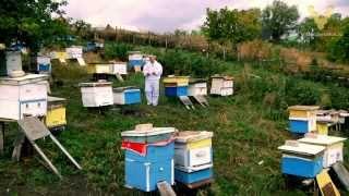 7 DVD — Болезни пчёл. Часть 2 (1 час 17 минут)