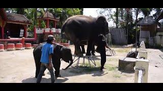 Przerażające, jak traktują słonia w ZOO. Wszystko dla radości turystów   Aktualności 360