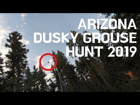 Dusky Grouse Hunt 2019