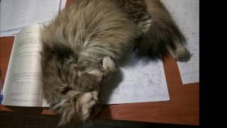 Кошка помогает делать уроки