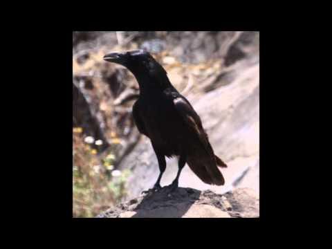 The Birds Part 1 - The Weeknd (PZVK Instrumental Remix)
